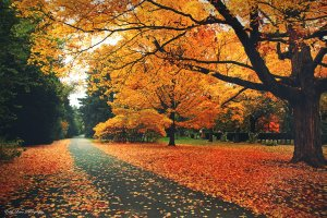 autumn_passage_by_mylifethroughthelens-d5jb4lo